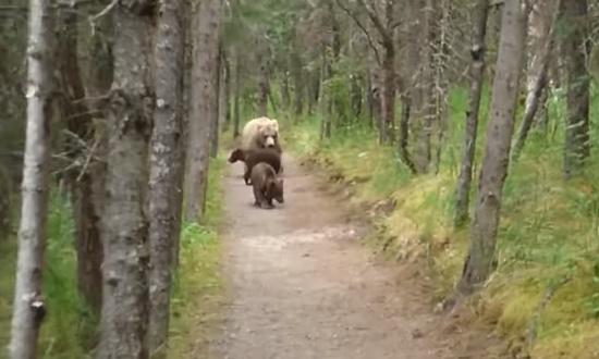 熊の親子と遭遇してしまった男性5
