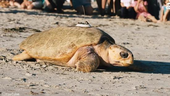 turtle1-1200x680