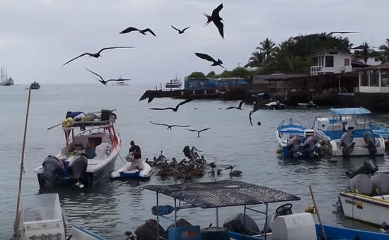 年間を通して暖かい気候のガラパゴス諸島
