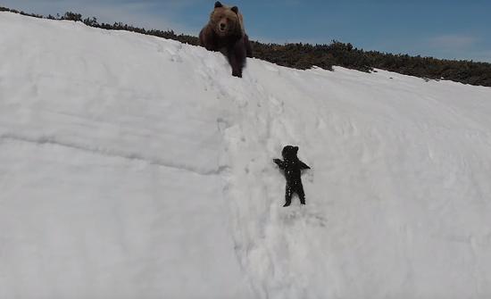 ドローンに驚く親熊と落ちる子熊