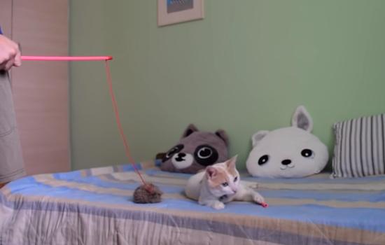 遊んでいたおもちゃを飼主さんに壊され悲しみに暮れる猫