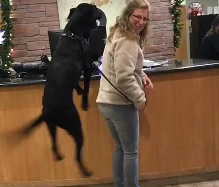 動物病院が大好き過ぎてジャンプが止まらない犬2