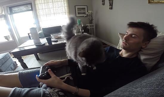 テレビゲームをしたいのに遊ばせてくれない猫2