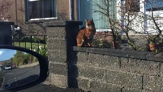 飼主さんの帰りを門で待っていてくれる忠猫トント