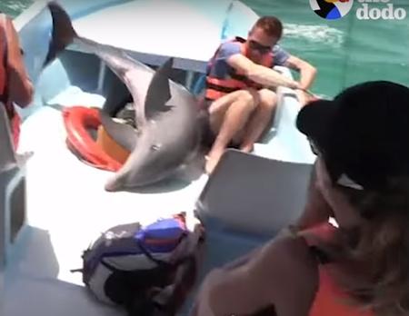 ジャンプして乗ってしまったイルカの救出劇
