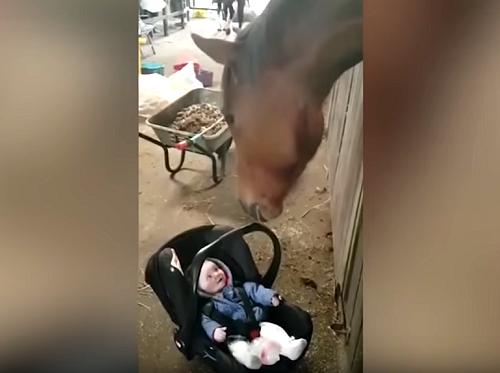 赤ちゃんをあやして笑顔にする優しい馬