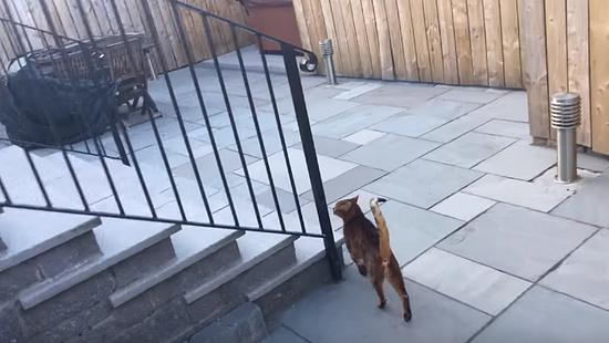 飼主さんの帰りを門で待っていてくれる忠猫トント8