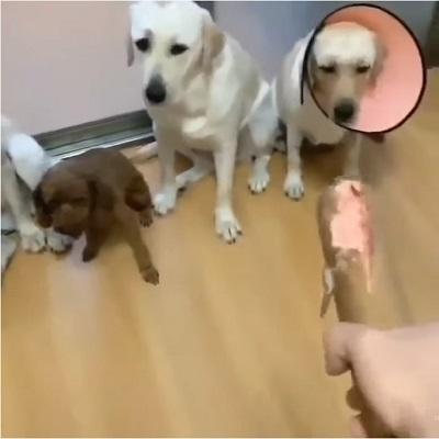 dog1-3
