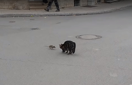 ネズミを追いかけ回そうと思ったら逆に追い回された猫01