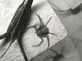 蜘蛛ってこんなに可愛いの!?砂をかけて一生懸命体を隠そうとする可愛いクモ君