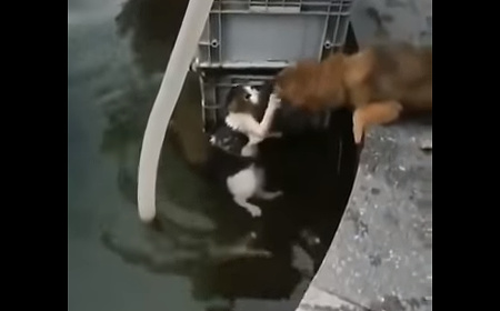 犬が水から猫を救う02
