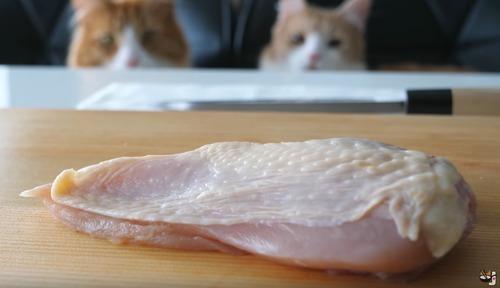 catfood_3