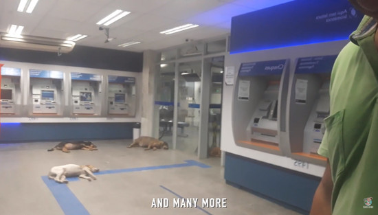 atm-dogs3