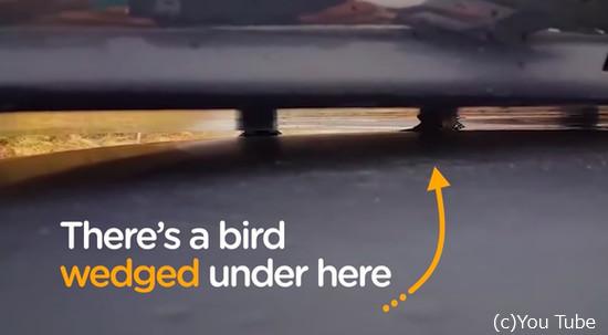 動けなくなっていた小鳥を助けた心優しい男性2
