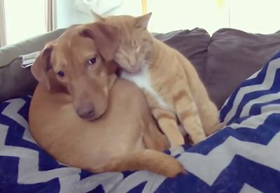 犬と猫がカップルにしか見えない10