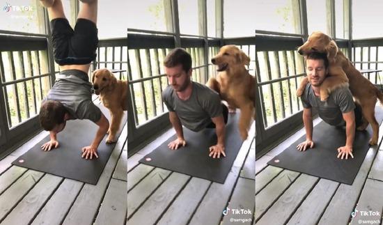 yogi_dog1200-1200x705