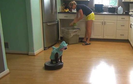 サメコスチュームでルンバに乗って掃除機をかけ回る猫さん