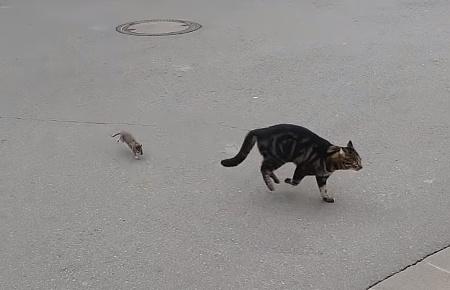 ネズミを追いかけ回そうと思ったら逆に追い回された猫02