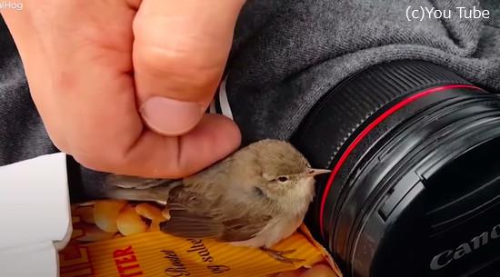 動けなくなっていた小鳥を助けた心優しい男性5