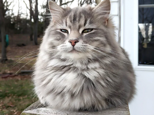 「う~、今日は寒いな~」寒くて丸まっているもふもふな猫