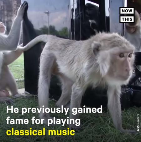 musician3
