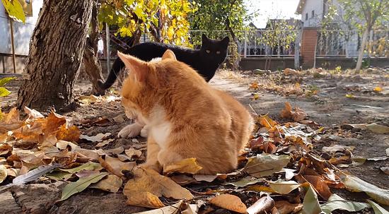 お昼寝を若いメス猫に邪魔されてしまったオス猫4