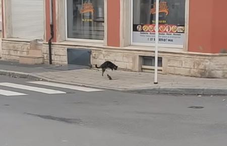 ネズミを追いかけ回そうと思ったら逆に追い回された猫00_2
