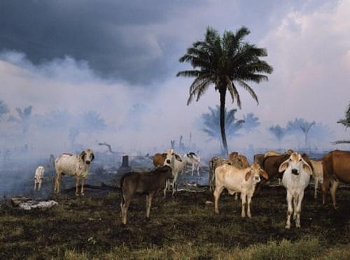 人類は1970年以降で約60%の動物を絶滅に追いやった