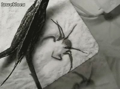 可愛い蜘蛛