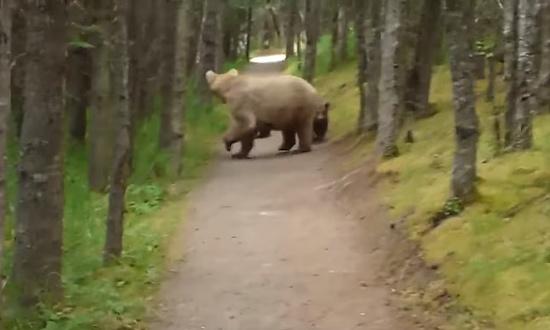 熊の親子と遭遇してしまった男性3
