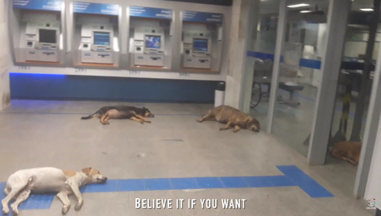 atm-dogs4