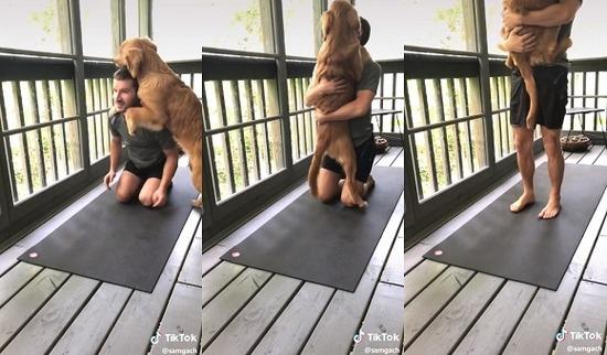 yogi_dog3