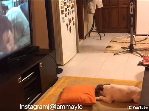 『こ、怖いよぉ…』犬がホラー映画を見た結果
