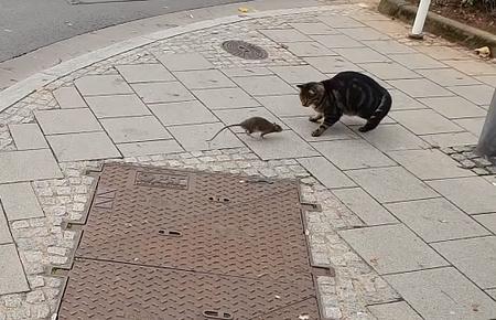 ネズミを追いかけ回そうと思ったら逆に追い回された猫03