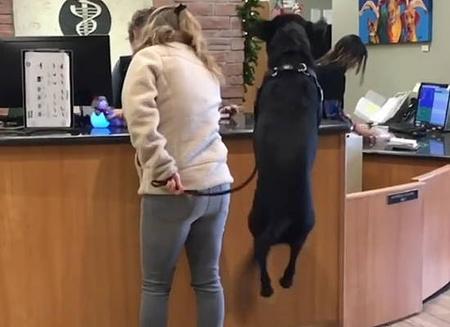 動物病院が大好き過ぎてジャンプが止まらない犬4