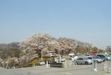 さくら・さくら宿泊第2駐車場
