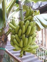 バナナ:2