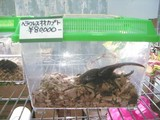 ムシキング商品:2