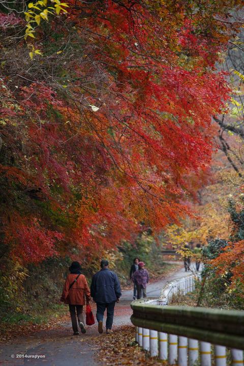 龍神峡(紅葉)5