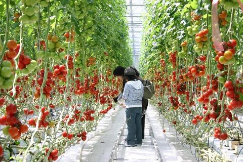 収穫体験イメージ