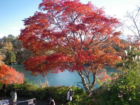 五色沼 紅葉 10月
