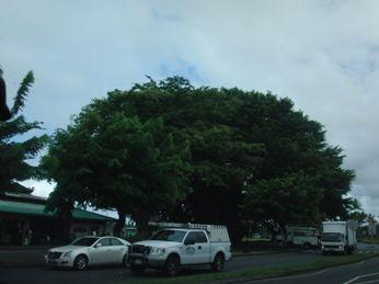 ハワイ島ヒロ3