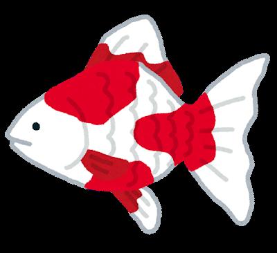 fish_kingyo2