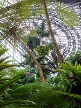 熱帯植物園