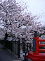 nakachobashi