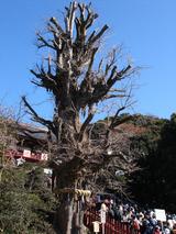 鶴岡八幡宮01
