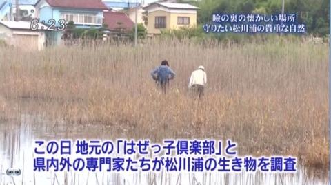 松川浦全域「ヒヌマイトトンボ」生息地調査
