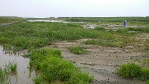 大湿地(名前募集)