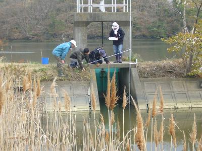 野崎湿地水位調査