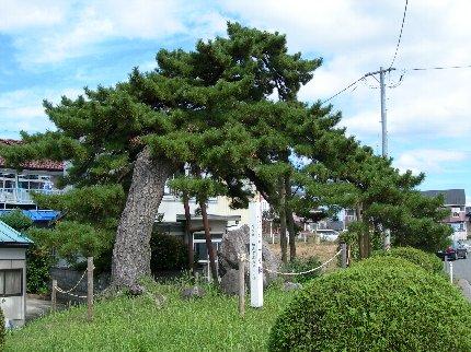 [定例学習] 松川浦歴史探訪・その1 「下り松の記憶をひも解く」